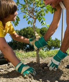 Planting-A-Tree-Fall